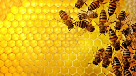 Combs-and-Bees-1140x641